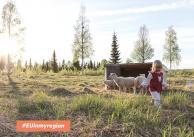 Projekt współpracy przedsiębiorców i podmiotów publicznych na rzecz rozwoju Green Care w północnej Finlandii, Szwecji i Norwegii
